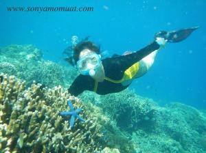 snorkeling menjangan island diving underwater bali