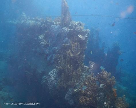 Japanese Shipwreck Amed Bali snorkeling