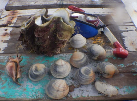 snorkeling belitung babel coral kerang