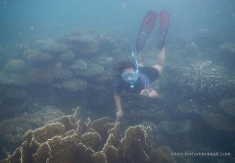 pulau babi kecil belitung babel