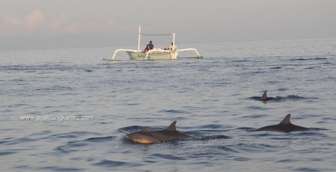 lovina beach buleleng bali dolphine