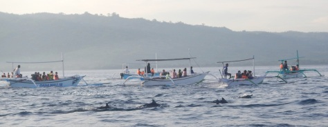 lovina beach buleleng jukung dolphin
