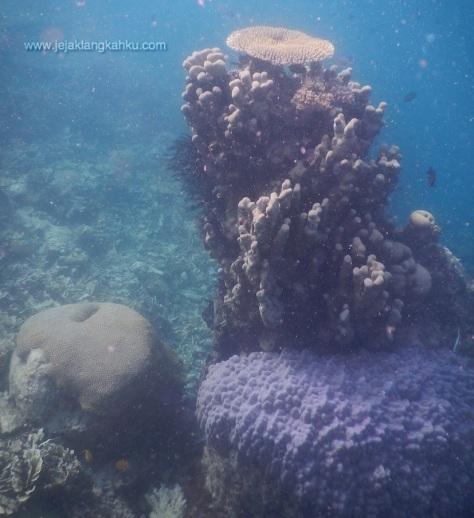 snorkeling di pulau kayu genteng wisata pulau seribu