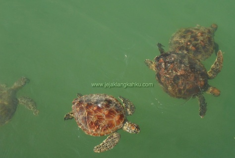 wisata pulau seribu underwater snorkeling beach