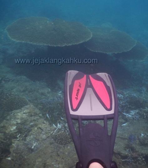 snorkeling teluk kiluan lampung 11