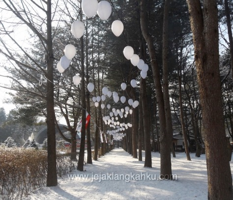 nami island south korea 13