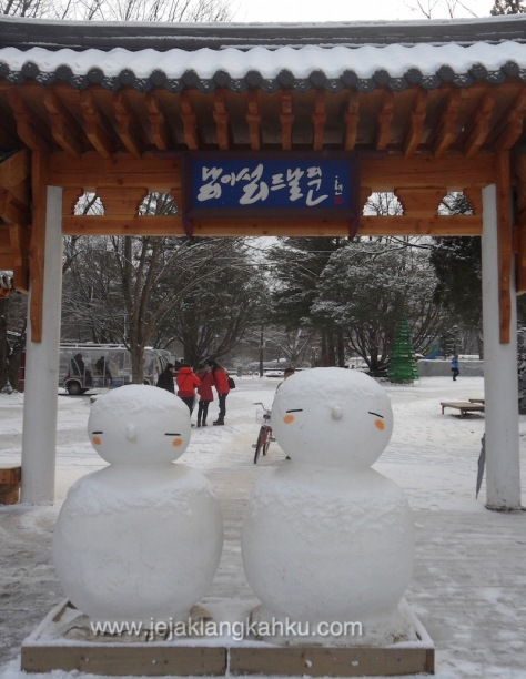 nami island south korea 4