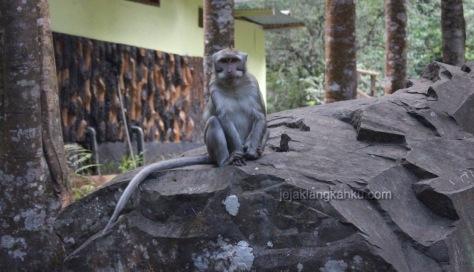 monyet di coban rondo malang