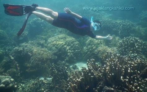 snorkeling pulau pahawang lampung 12