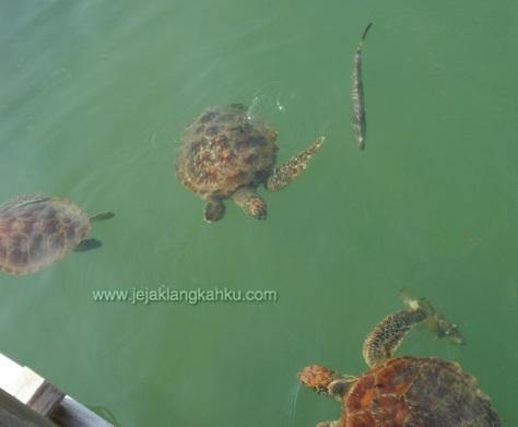 taman biota laut pulau harapan 5-1