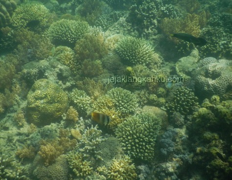 gili nanggu lombok 4