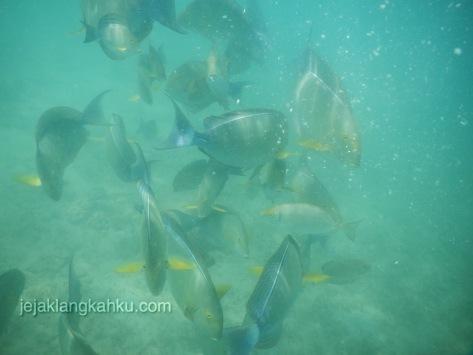 gili nanggu snorkeling lombok 1