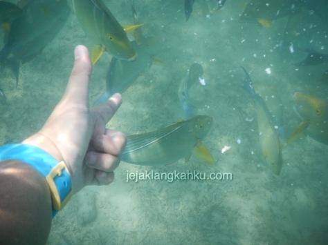 gili nanggu snorkeling lombok 2