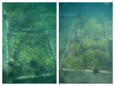gili nanggu snorkeling lombok 6-1