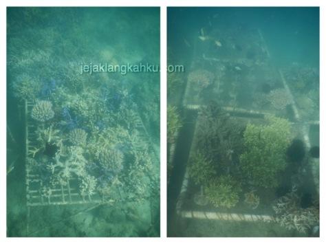 gili nanggu snorkeling lombok 7-1