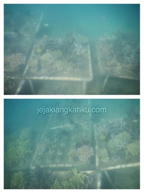 gili nanggu snorkeling lombok 8-1